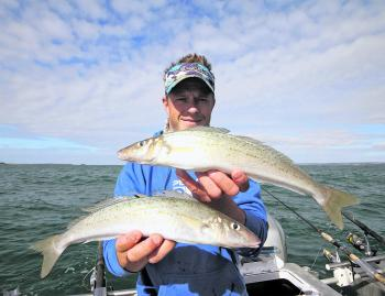 Fishing a little deeper than normal can lead to a catch of more solid whiting. Concentrate efforts on depths of 5-10m.