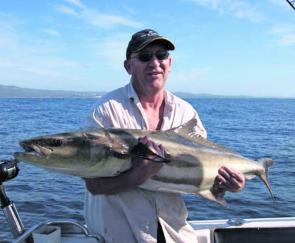 This angler got more than he bargained for when targeting snapper: 25kg of cobia.