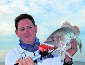 Golden snapper are notorious for being picky and hard to catch, sometimes demanding nothing less than a live bait. However, fishing light and using soft plastics is often enough to get the fish to bite.