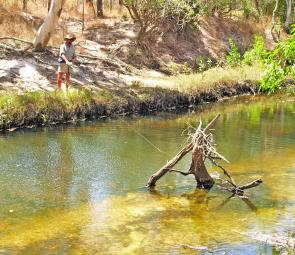 It doesn't matter what area of Lakefield National Park you are fishing, there are always plenty of snags, rock bars, overhanging foliage or washed out banks that will hold barra in good numbers.