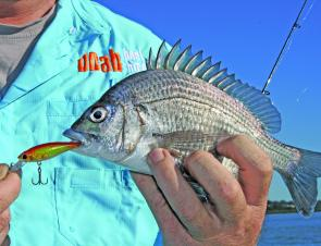 The bream fishing in the area is relatively easy and largely untapped.