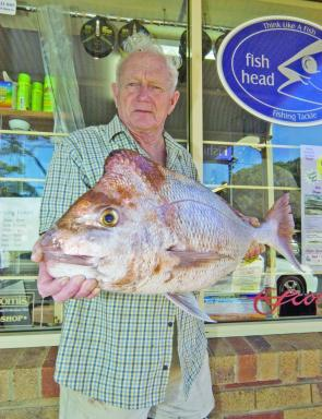 Don Venn with a cracker 7.9kg snapper from Peel Island.