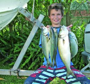 Although not the huge schools we are used to, but the quality of the tailor has been really worth the effort. Troll chrome lures or hard plastics in shades of blue or white – anything that resembles a pilchard will usually be snatched up very quickly.