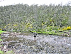 Brett Dennis fishing a stretch of the magnificent upper Mitta Mitta River near Anglers Rest.