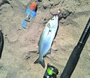 Fishing monthly magazines casting lures in the surf for Surf fishing lures