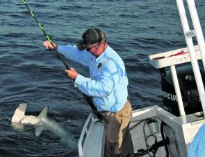 Hammerheads often grab baits meant for other species. They go well on the barbecue when small but make sure you take the right one.