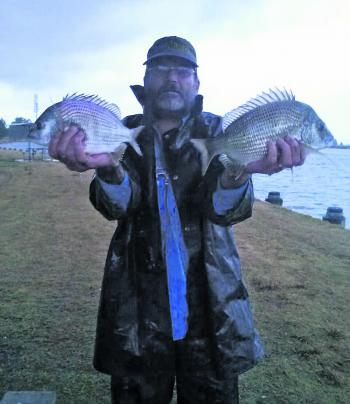 A couple of nice bream from Raymond Terrace. They are moving down from way up the top of the river and should be travelling during May.