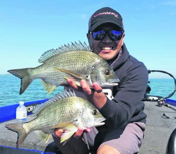 Surface lures doing the trick on these healthy bream.