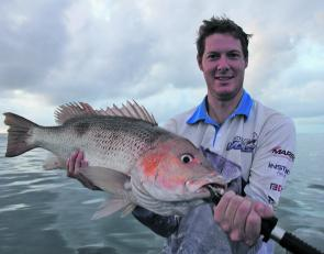 Dan Kaggelis, former QFM Bowen correspondent, who now harasses the golden snapper off Cairns. Golden snapper can be caught all year round, so always have this challenging species on your bucket list.