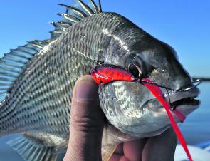 Another Lake Mac bream falls to the Madeye 38 blade.