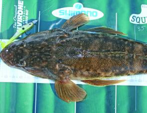 Flathead are throughout the bay at the moment and are suckers for soft plastics.