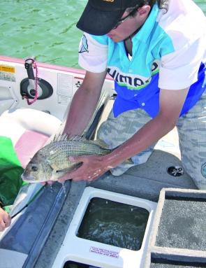 A quality livewell system will see your fish emerge as fresh as they went in.