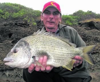 How's this for a solid bream? The author used small bread baits under a bobby float and caught a few luderick when this beast got in on the action. Fish like this aren't uncommon as the water begins to cool.