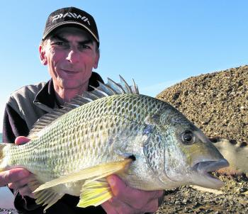 The author put in a few hours at a local rock ledge without hooking anything before this solid bream eventually found his bait. Another victim of white bread pinched over a small hook, presented close in under the whitewash.