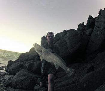 Sam Redman has been finding school mulloway around the headlands and releasing a few too.