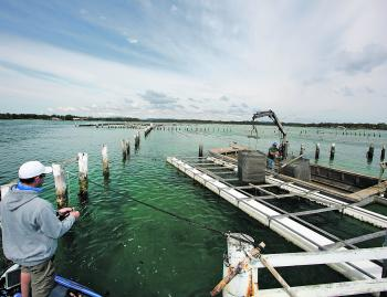 Take the time to get to know your local oyster farmers so you ensure your fishing activities don't interrupt their work on the leases. The farmers will be able to give you some great tips on where the fish are!