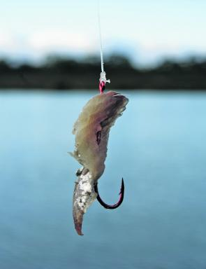 Small baits such as slithers of pilchard or pipi are quickly engulfed.
