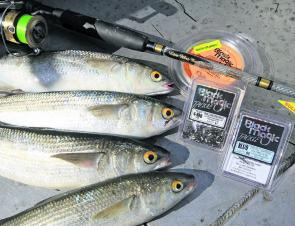 There is no point fishing heavy for mullet, light tackle will be far more fun and entertaining.