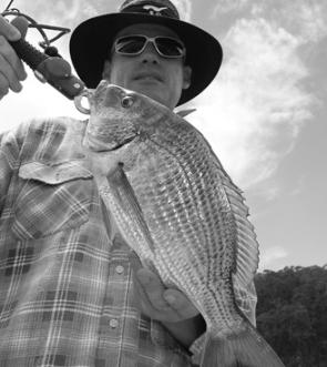 Bream like this are common in the Bega River.