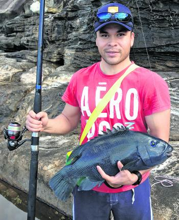 Mauricio Parra was rapt with his 60cm blue groper caught on 9kg mono. It picked up a peeled prawn and was released.