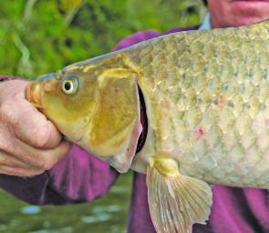 Carp are always an option at any time of year if the bass get too wary.