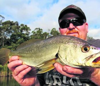 Small mulloway are a regular by-catch when fishing the lower reaches of the river.