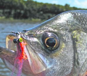 An eye for a fly. EP have excellent vision and find it hard to refuse baitfish-style flies.