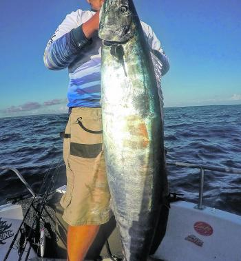 Wahoo can grow to monster sizes and it's not uncommon to find them in our local waters.
