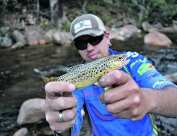 Jounama Creek is packed with small rainbow and brown trout boasting beautiful colours and markings.