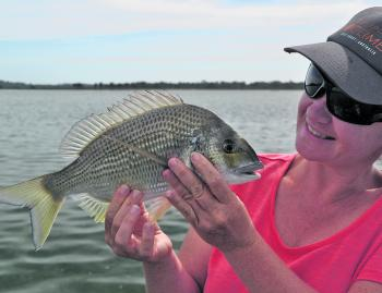 Why not admire a lovely Wallaga Lake bream.