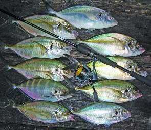 Sorrento silver trevally, a fantastic after-dark option.