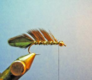 Take 2 turns of the ribbing around the hook then holding the feathers between thumb and forefinger on the other stroke the hackle fibres back towards the eye of the hook to make them stand up. Then wind the ribbing between the upright fibres on even turns