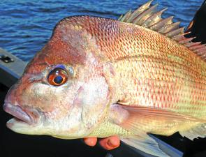 Although offshore fishing can be tough at this time of year, there has been a reasonable sprinkling of snapper around.