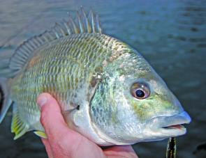 Bream should become easier to catch as water temperatures rise this month.