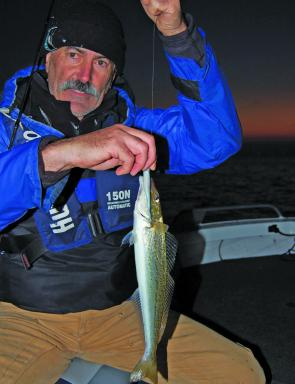 Andy Cannon from Essendon with a winter whiting taken on a Gulp in shallow water after dusk. Pic Courtesy Marc Ainsworth.