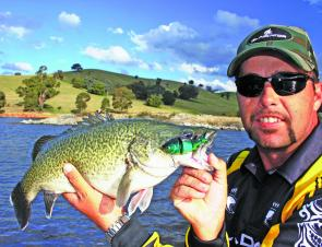Casting lures for natives around the shallows of Blowering and Burrinjuck just before dark is great fun and can be very rewarding. This Murray cod was caught on one of the new Ballista Alive swimbaits. Swimbaits are very popular in the US and anglers in A