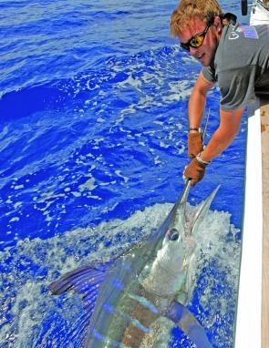Striped marlin were thought to be more of a summer species, but lately have been fishing well in the cooler months.