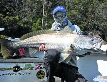 Some big mulloway will be on offer around the lower reaches for those using fresh caught live baits and well-presented lures.