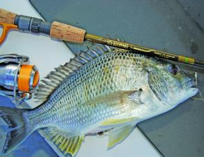 The bright orange Sunline Rock Fish PE is the author's first choice when it comes to lure casting for bream.