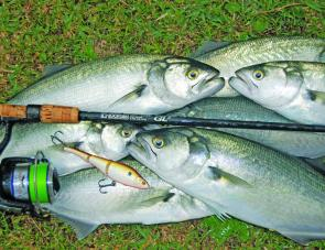 The vivid green Super PE works exceptionally well for applications like spinning for tailor around inshore reefs.