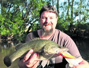 A small Murray cod I caught while walking my floating hardbody lure through the snags of a deep hole.