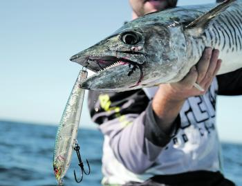 Stickbaits have become the go to technique for mackerel. Using double or single hooks instead of trebles can give you a much better hook set on these toothy critters.