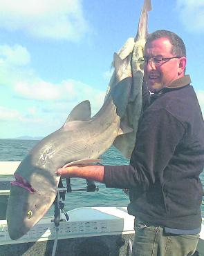 Daniel Mizzi emailed through this photograph of a cracking 17kg gummy shark taken between Werribee South and Portarlington on pilchard.