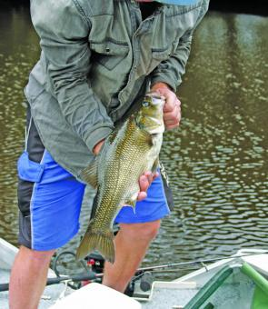 A great bass season continues, with plenty of hungry fish now in their Summer freshwater haunts.