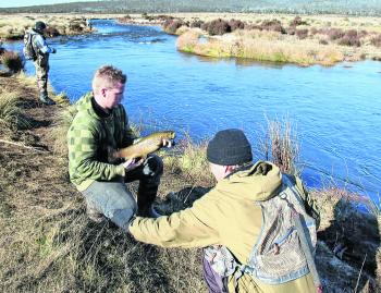 As soon as there is substantial rain in the catchment, masses of brown trout will enter the Eucumbene and Thredbo rivers on their pre-spawning run and attract anglers from far and wide for the annual madness.