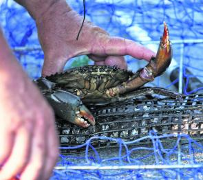 Mud crabs are fine dining but far too expensive unless you catch your own.