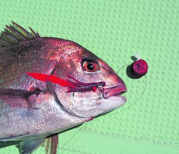 A Yamashita tai-kabura jig was the undoing of this snapper.