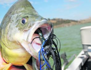 Bottom-contact lures don't come any better than skirted jigs. Patience and concentration are what is needed; it's as much a mental game as anything else.