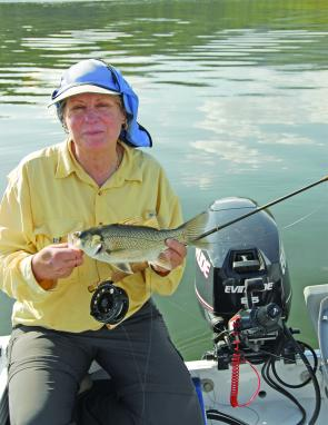 A 5wt rod is suitable for catching this small Maroon dam bass.