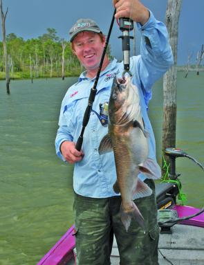 Fork-tailed catfish are considered a curse when targeting barra even when they reach this size.